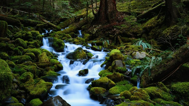 forest_brook_Wallpapers_1366x768.jpg